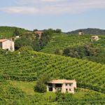What's new in Prosecco?