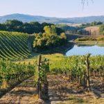 Why Vineyard Soil is So Important for Terroir!!!